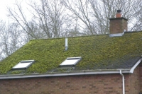 Moss roof damage
